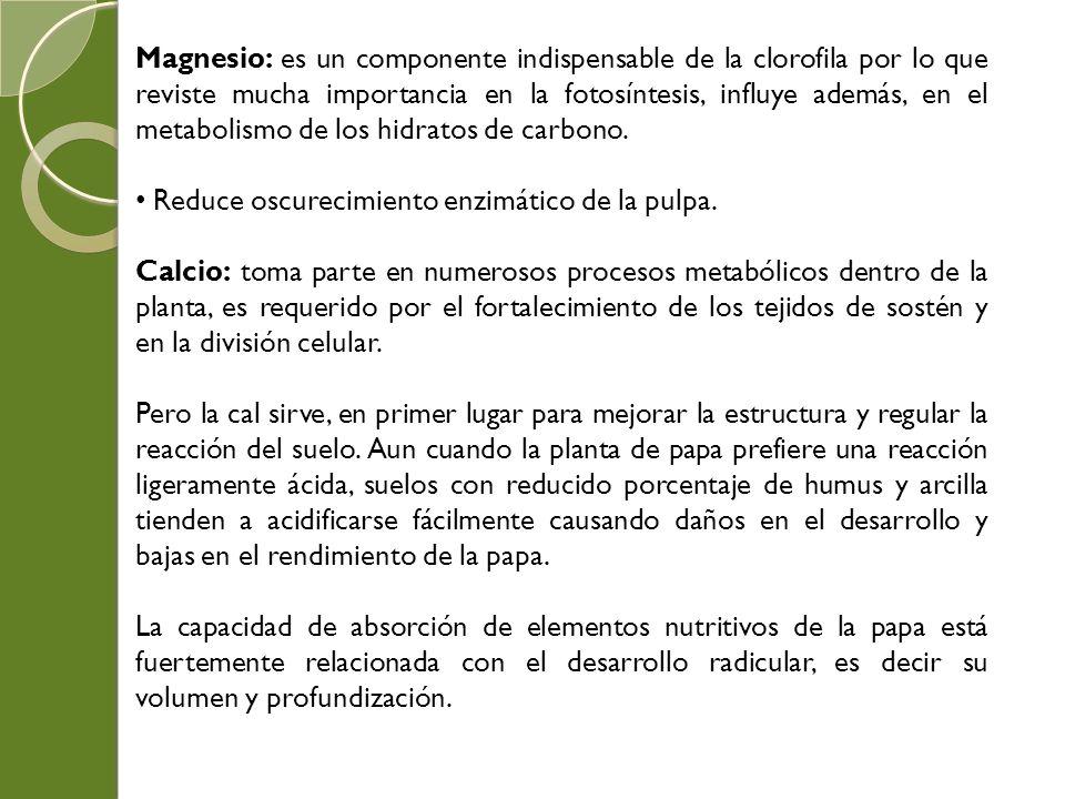 Magnesio: es un componente indispensable de la clorofila por lo que reviste mucha importancia en la fotosíntesis, influye además, en el metabolismo de los hidratos de carbono.