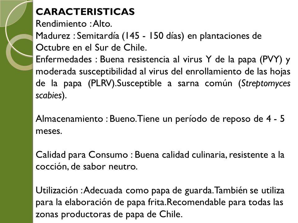 CARACTERISTICAS Rendimiento : Alto. Madurez : Semitardía (145 - 150 días) en plantaciones de Octubre en el Sur de Chile.