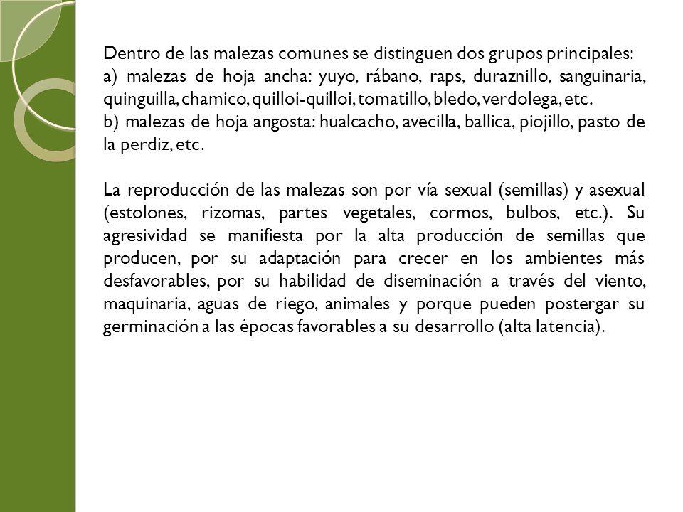 Dentro de las malezas comunes se distinguen dos grupos principales: