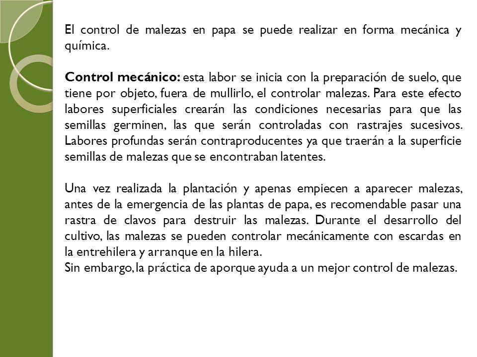 El control de malezas en papa se puede realizar en forma mecánica y química.
