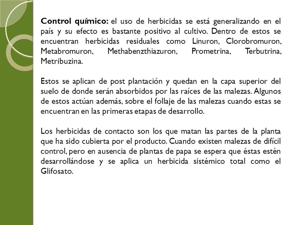 Manejo del semillero de papas ppt video online descargar for Clausula suelo desde cuando se aplica