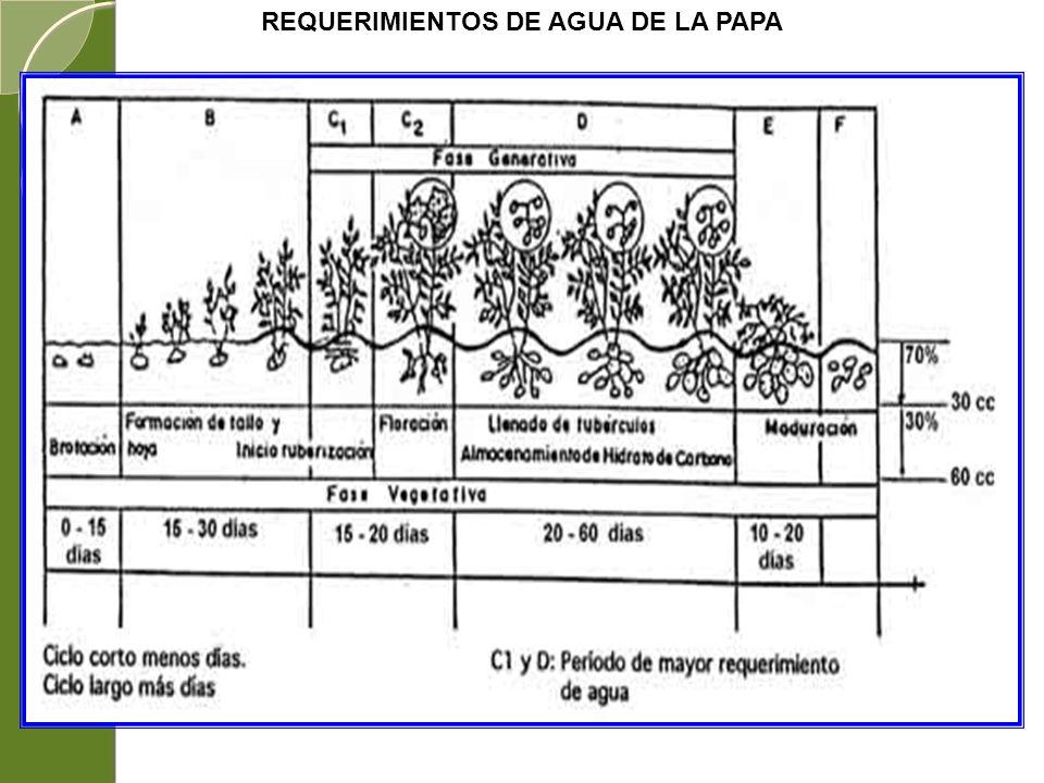 REQUERIMIENTOS DE AGUA DE LA PAPA