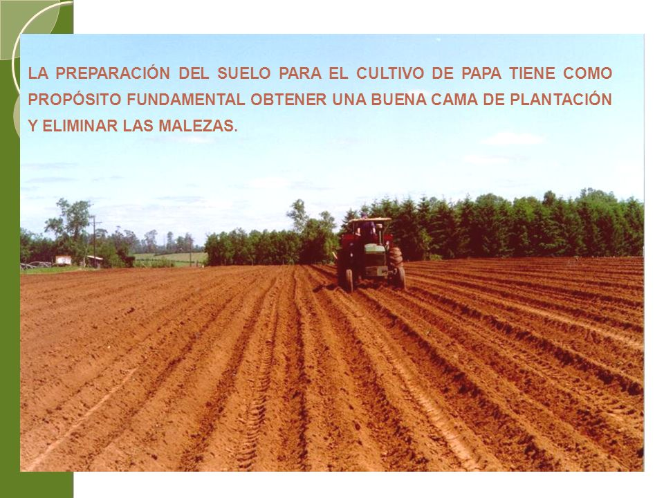 LA PREPARACIÓN DEL SUELO PARA EL CULTIVO DE PAPA TIENE COMO PROPÓSITO FUNDAMENTAL OBTENER UNA BUENA CAMA DE PLANTACIÓN Y ELIMINAR LAS MALEZAS.