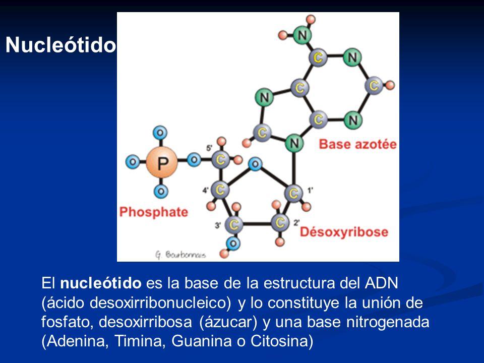 Nucleótido