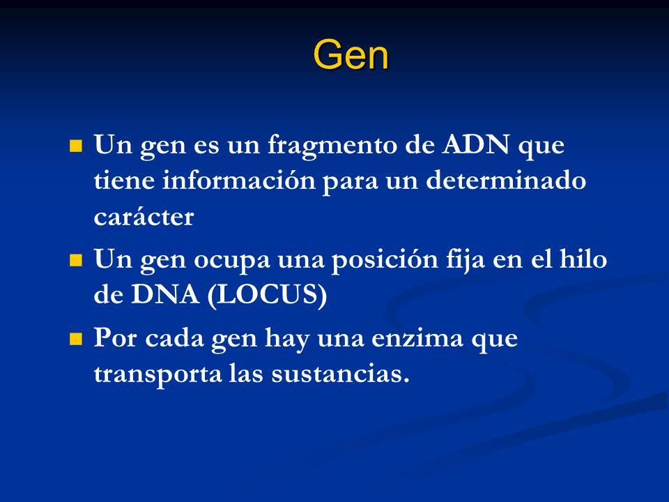 Gen Un gen es un fragmento de ADN que tiene información para un determinado carácter. Un gen ocupa una posición fija en el hilo de DNA (LOCUS)