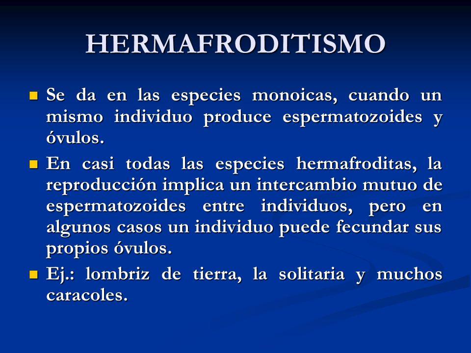 HERMAFRODITISMO Se da en las especies monoicas, cuando un mismo individuo produce espermatozoides y óvulos.