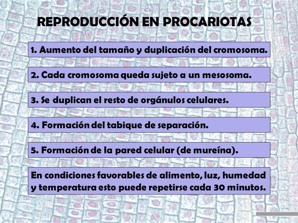 REPRODUCCIÓN EN PROCARIOTAS