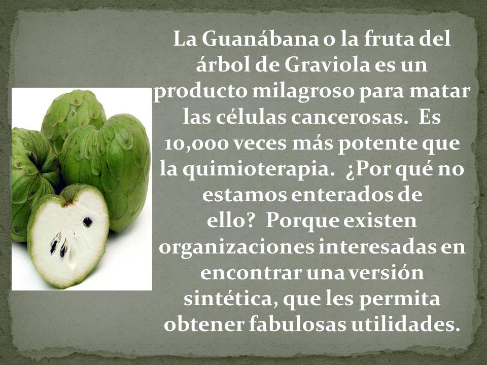 La Guanábana o la fruta del árbol de Graviola es un producto milagroso para matar las células cancerosas. Es 10,000 veces más potente que la quimioterapia. ¿Por qué no estamos enterados de ello Porque existen organizaciones interesadas en encontrar una versión sintética, que les permita obtener fabulosas utilidades.