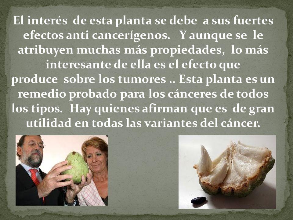 El interés de esta planta se debe a sus fuertes efectos anti cancerígenos.