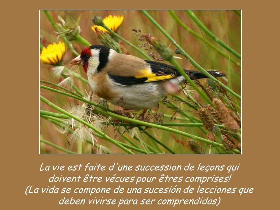 La vie est faite d une succession de leçons qui doivent être vécues pour êtres comprises.
