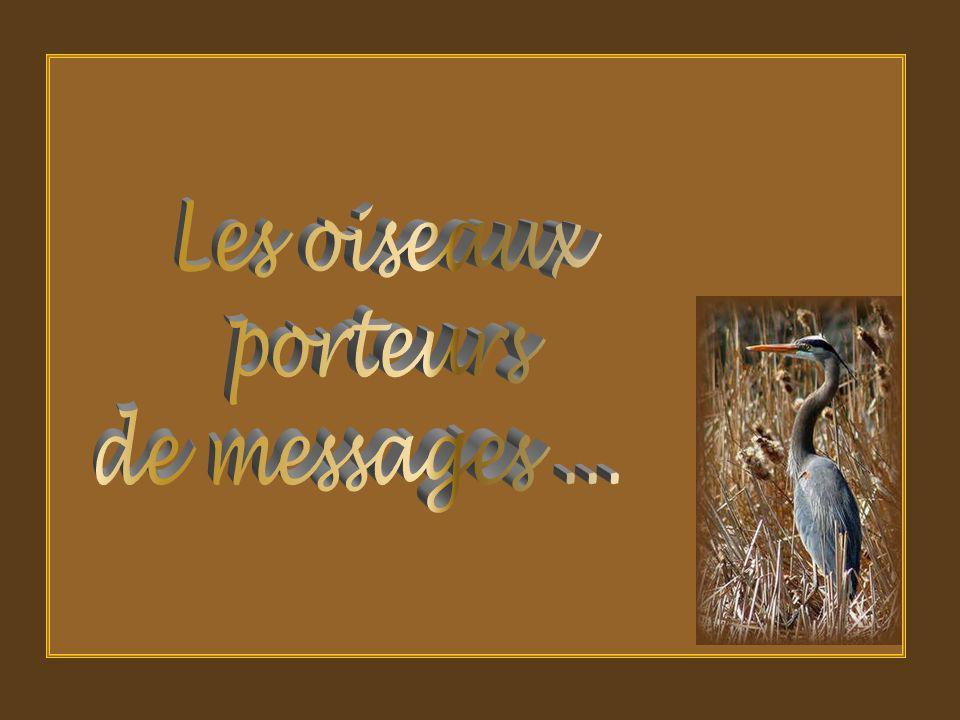 Les oiseaux porteurs de messages ...