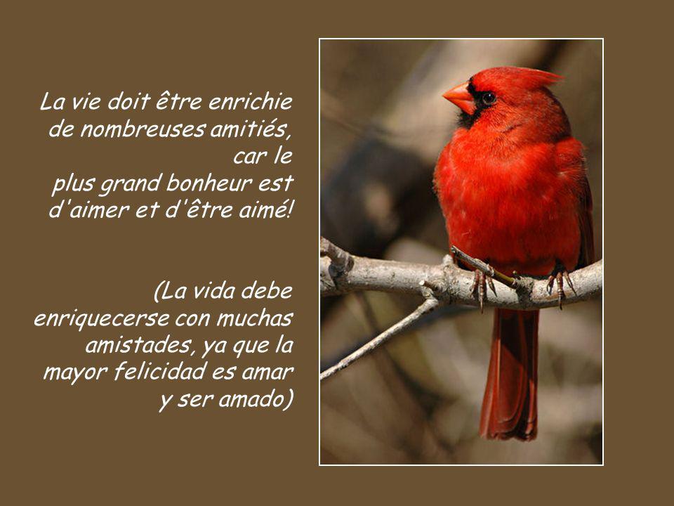 La vie doit être enrichie de nombreuses amitiés, car le plus grand bonheur est d aimer et d être aimé!