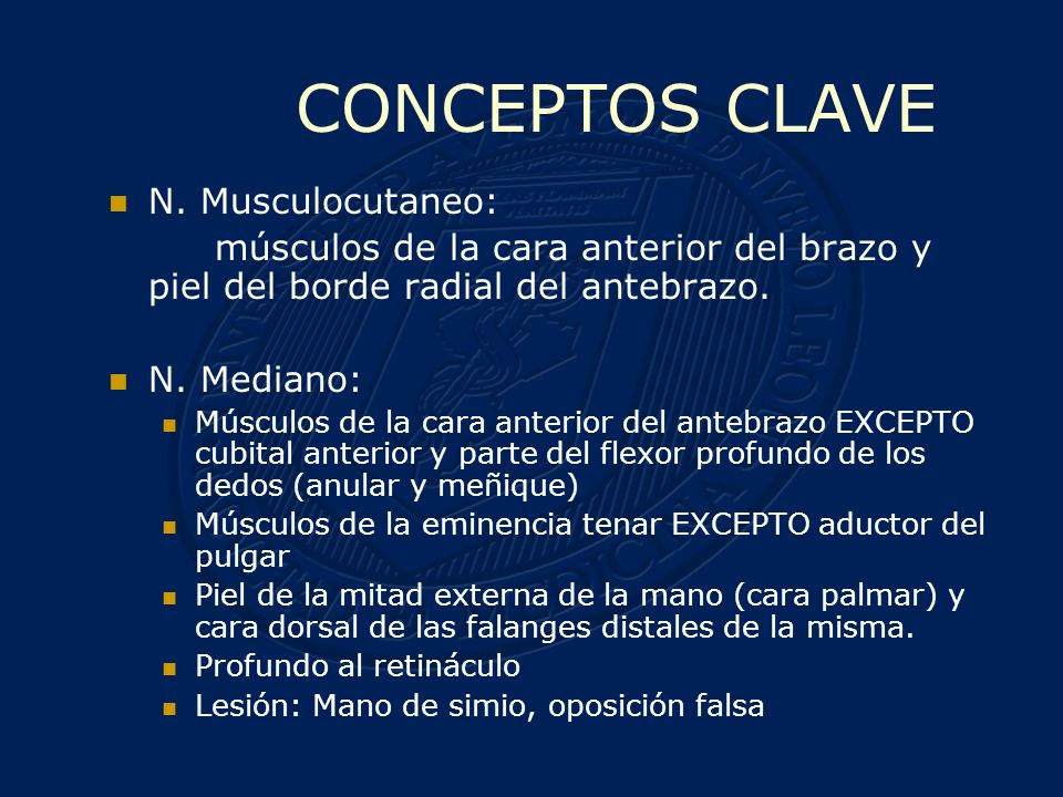 CONCEPTOS CLAVE N. Musculocutaneo: