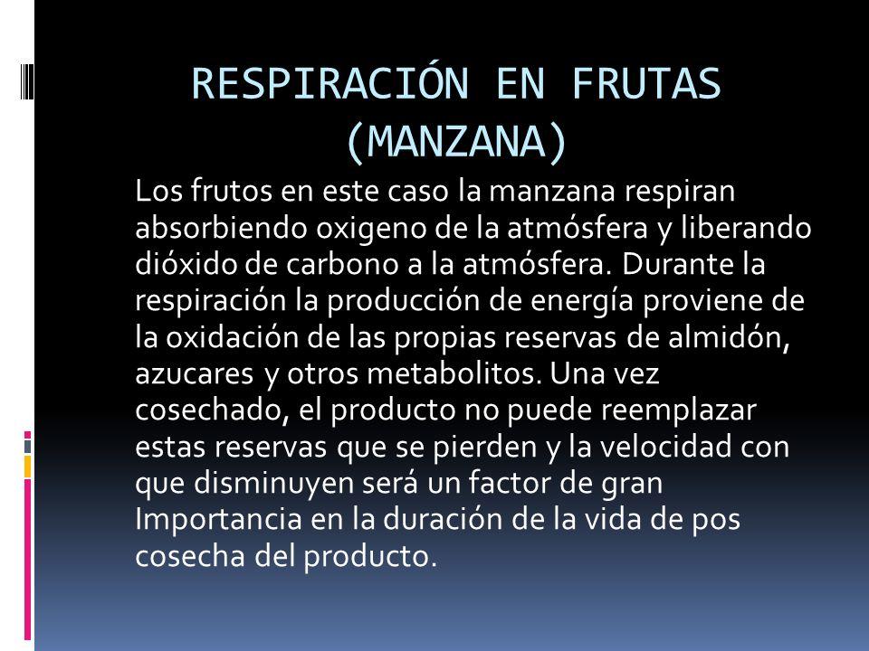 RESPIRACIÓN EN FRUTAS (MANZANA)