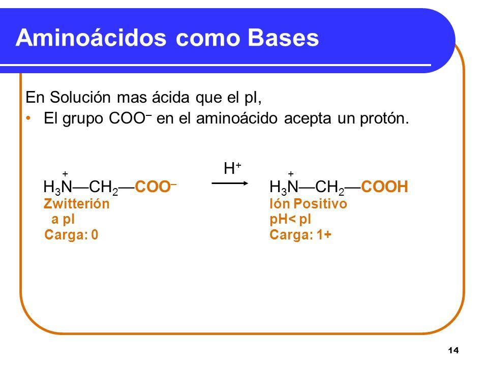 Aminoácidos como Bases