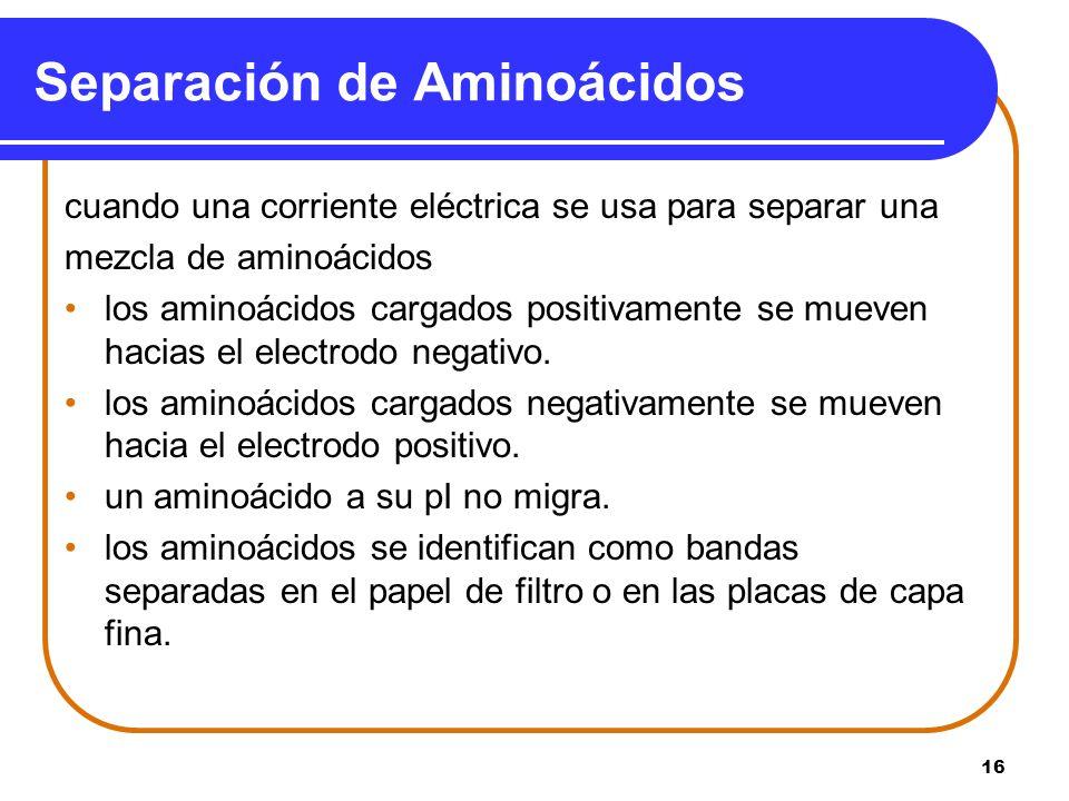 Separación de Aminoácidos