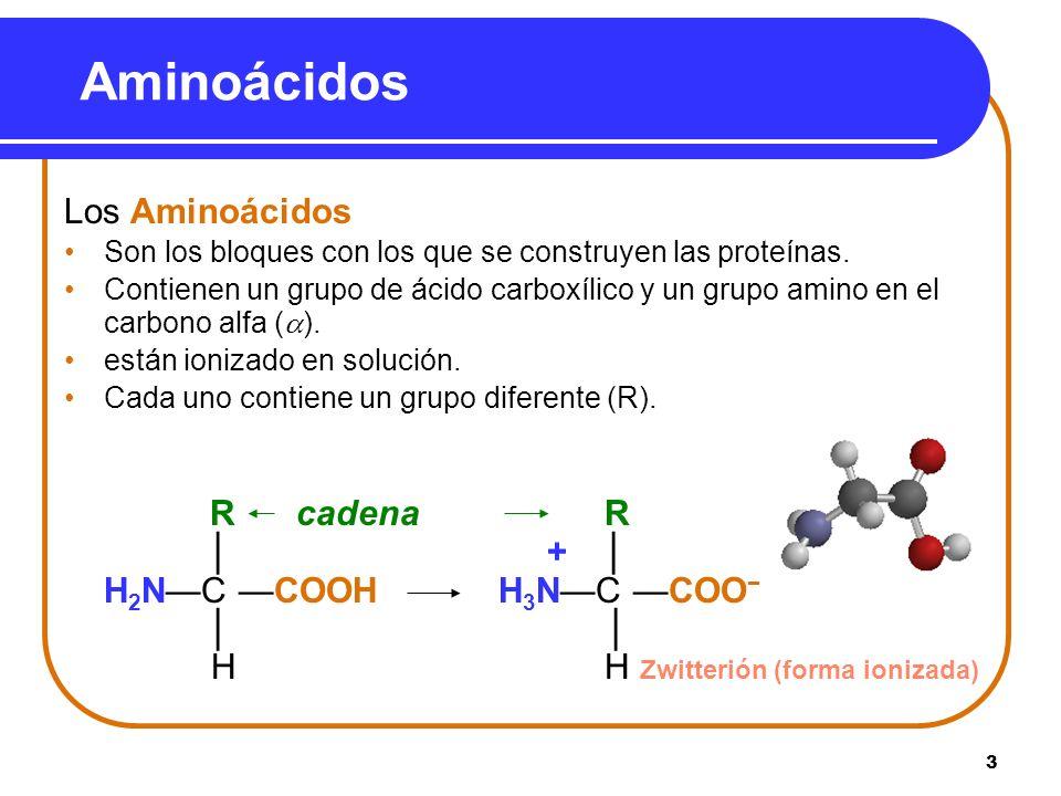 Aminoácidos Los Aminoácidos R cadena R │ + │ H2N—C —COOH H3N—C —COO−