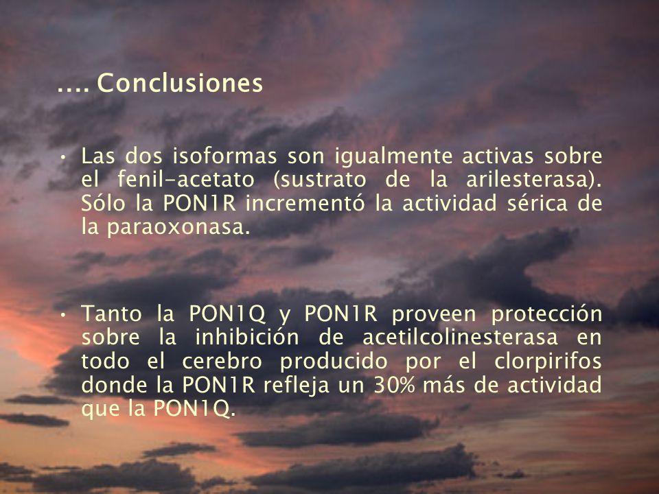 .... Conclusiones
