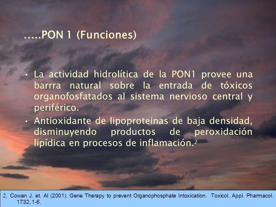 .....PON 1 (Funciones)