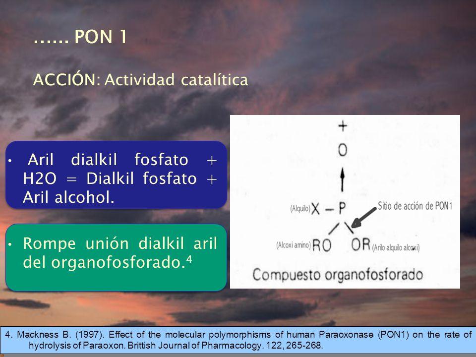 ...... PON 1 ACCIÓN: Actividad catalítica