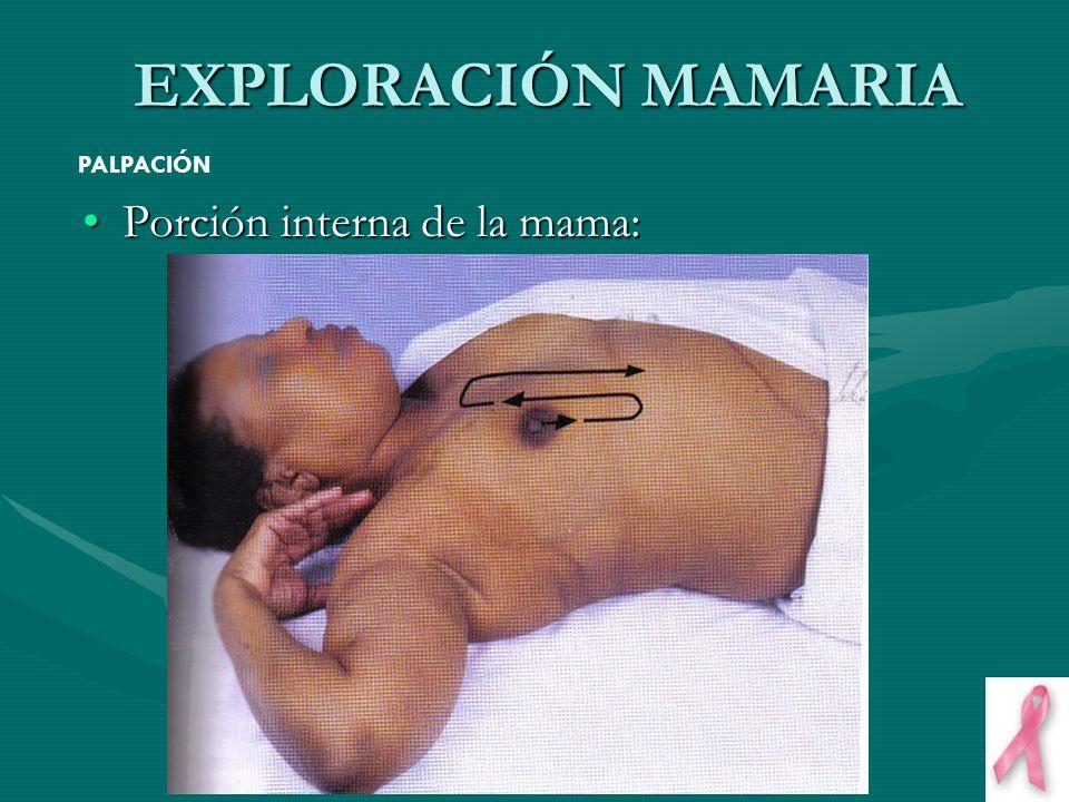 EXPLORACIÓN MAMARIA PALPACIÓN Porción interna de la mama:
