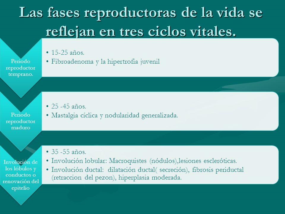 Las fases reproductoras de la vida se reflejan en tres ciclos vitales.