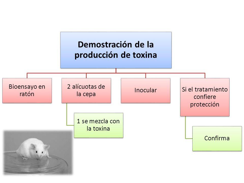 Demostración de la producción de toxina