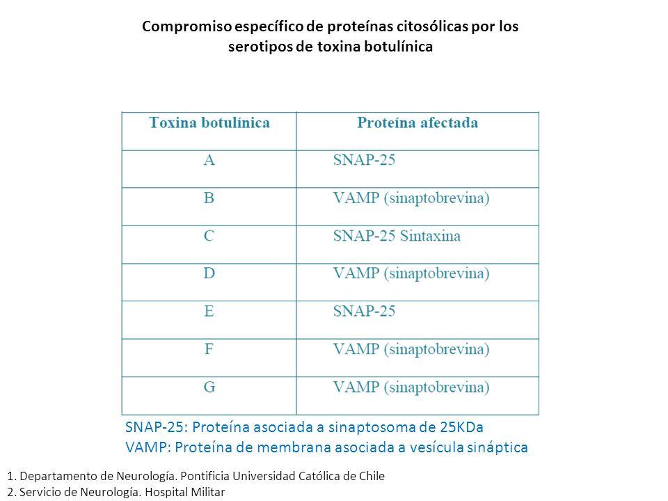 SNAP-25: Proteína asociada a sinaptosoma de 25KDa