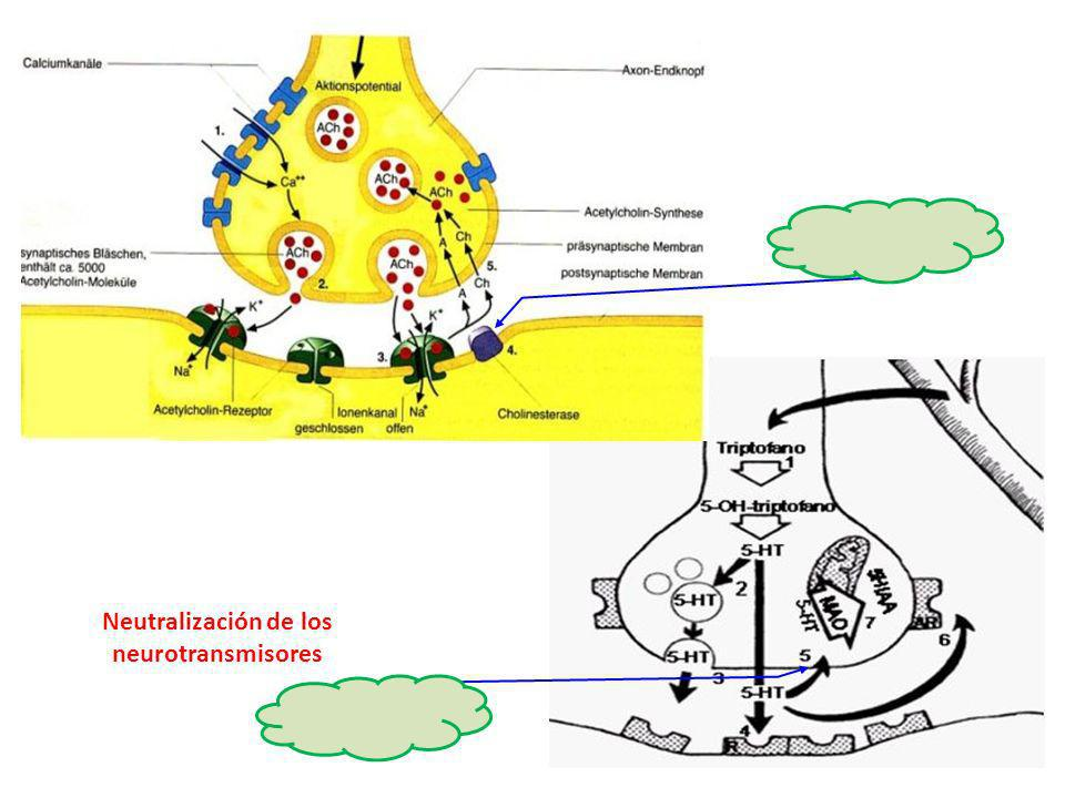Neutralización de los neurotransmisores