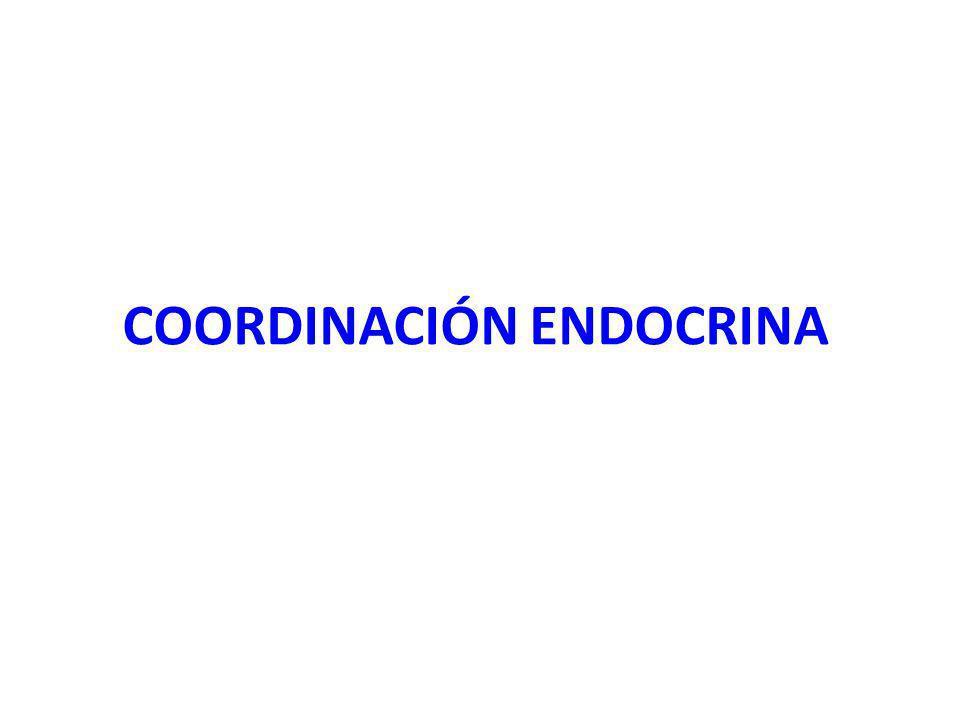 COORDINACIÓN ENDOCRINA