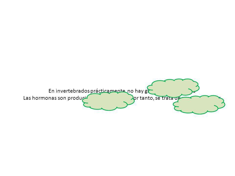 En invertebrados prácticamente no hay glándulas endocrinas