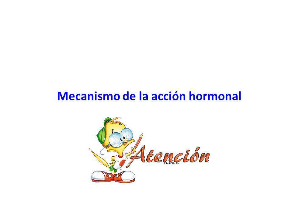 Mecanismo de la acción hormonal