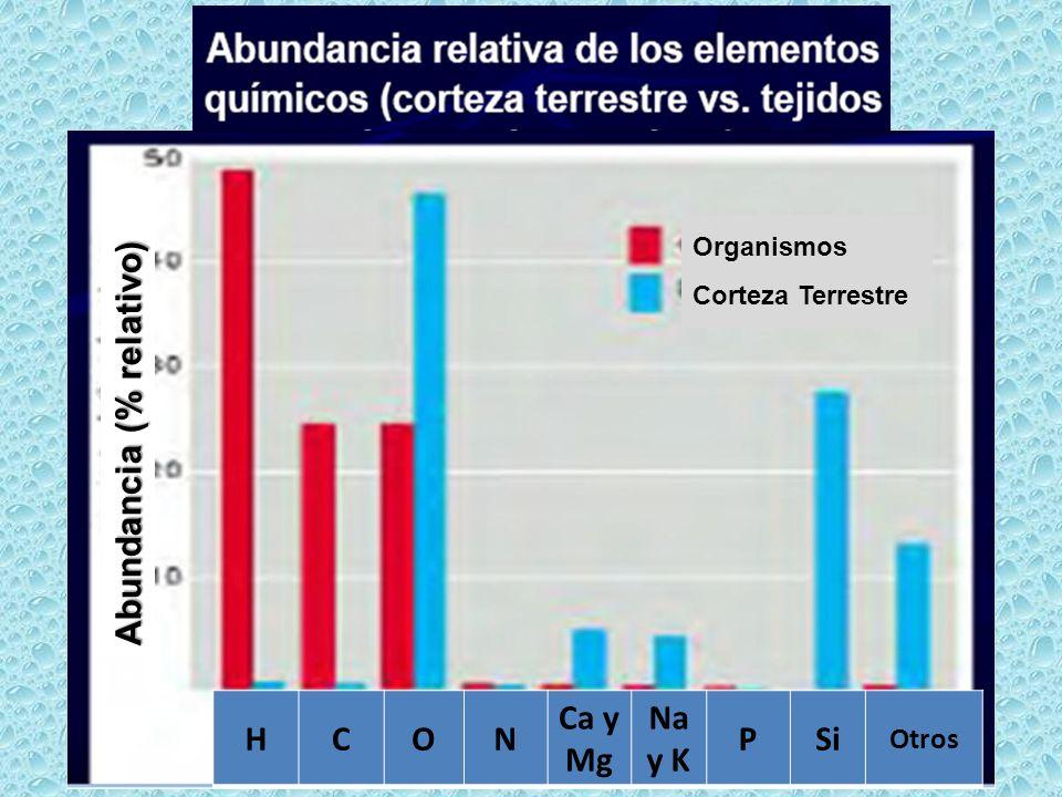 Abundancia (% relativo) H C O N Ca y Mg Na y K P Si