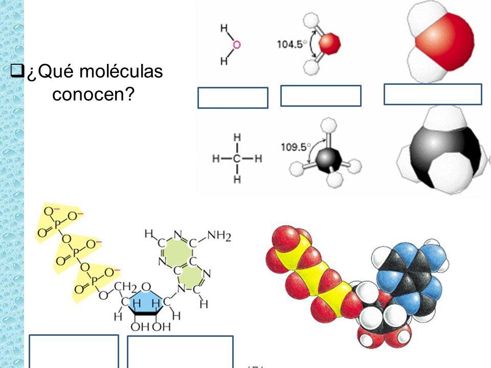 ¿Qué moléculas conocen
