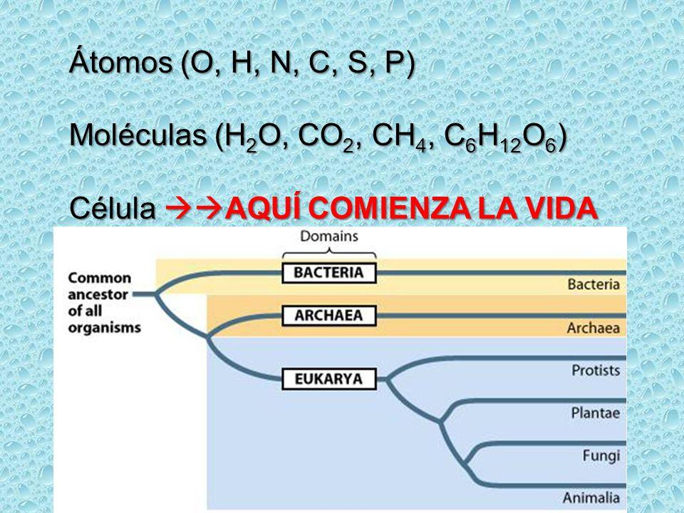 Átomos (O, H, N, C, S, P) Moléculas (H2O, CO2, CH4, C6H12O6) Célula AQUÍ COMIENZA LA VIDA