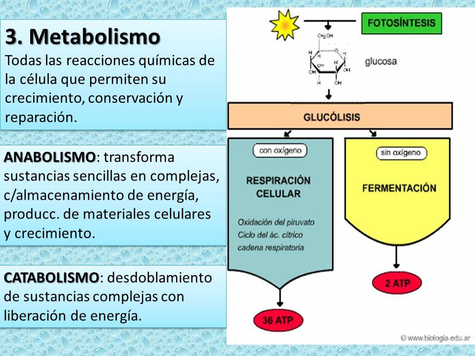 3. Metabolismo Todas las reacciones químicas de la célula que permiten su crecimiento, conservación y reparación.
