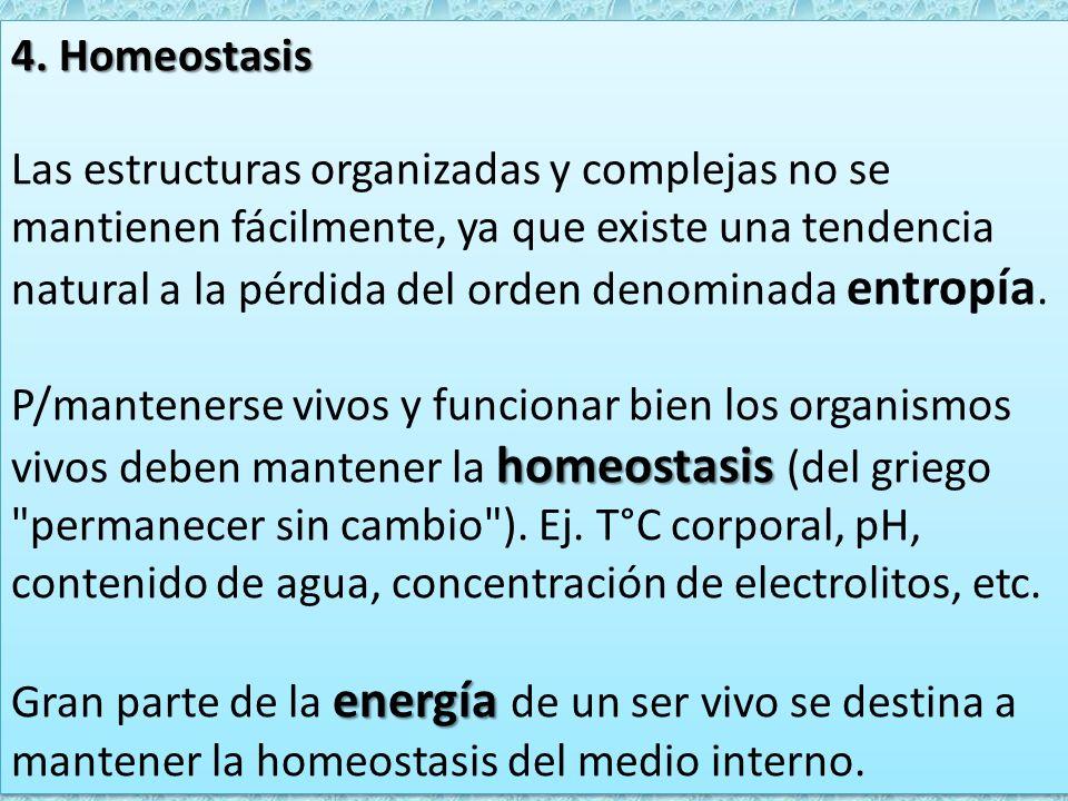 4. Homeostasis