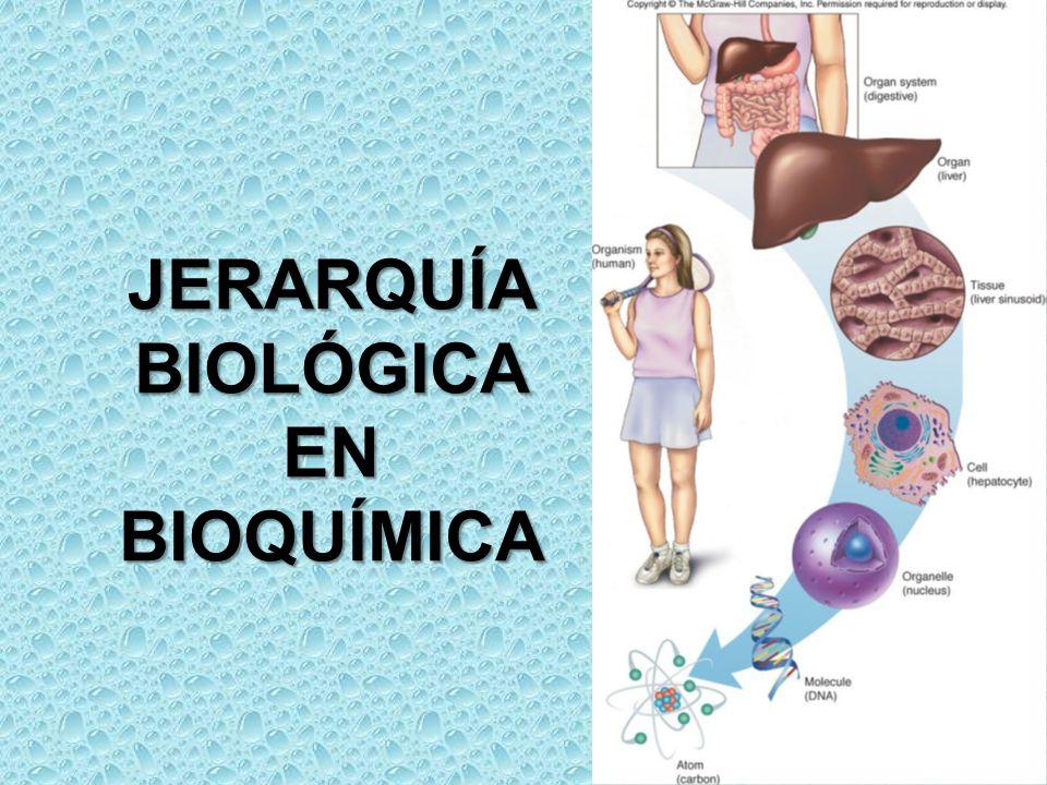 JERARQUÍA BIOLÓGICA EN BIOQUÍMICA