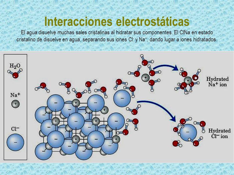 Interacciones electrostáticas El agua disuelve muchas sales cristalinas al hidratar sus componentes.