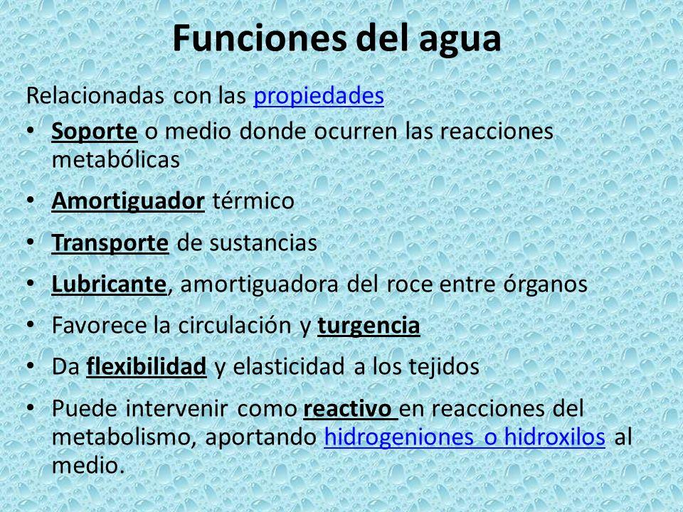 Funciones del agua Relacionadas con las propiedades