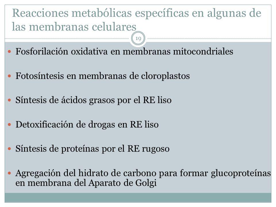 Reacciones metabólicas específicas en algunas de las membranas celulares