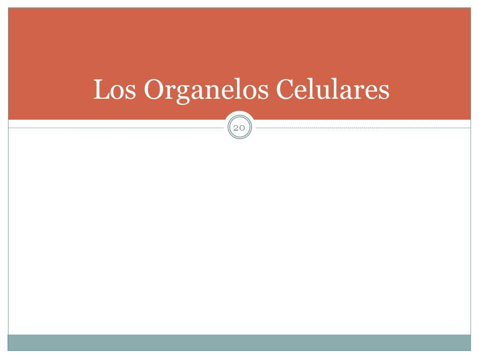 Los Organelos Celulares
