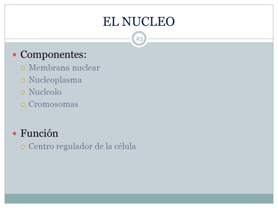 EL NUCLEO Componentes: Función Membrana nuclear Nucleoplasma Nucleolo