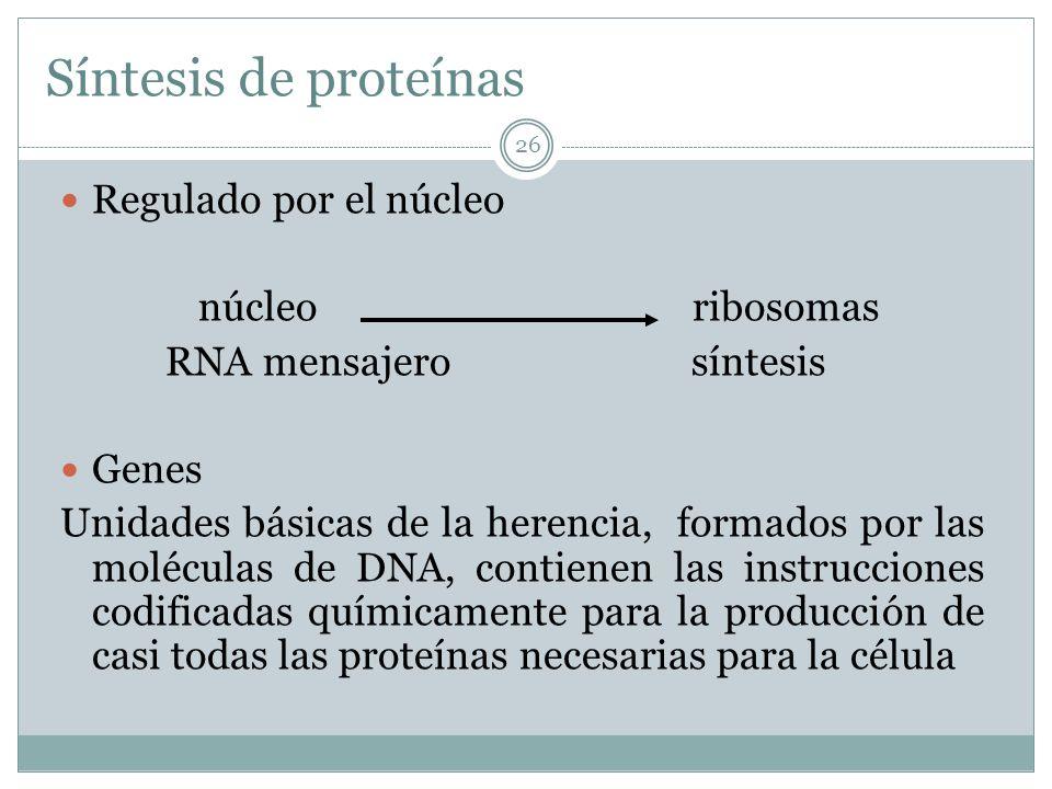 Síntesis de proteínas Regulado por el núcleo núcleo ribosomas