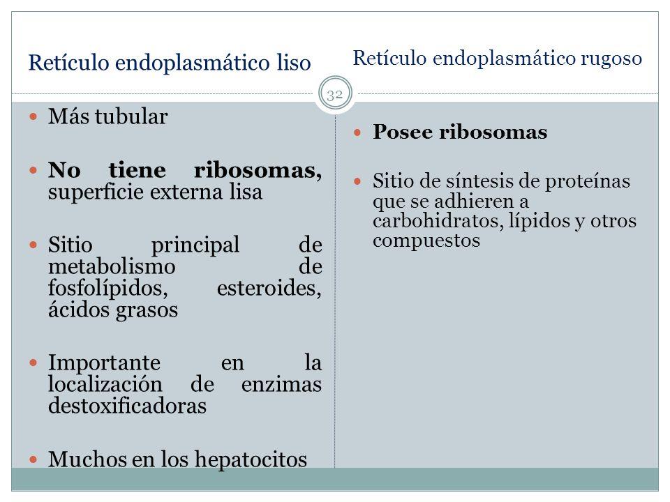 Retículo endoplasmático liso Más tubular