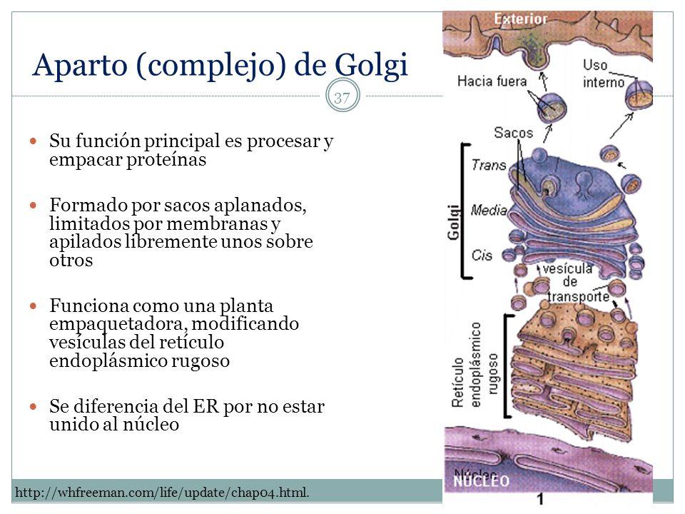 Aparto (complejo) de Golgi