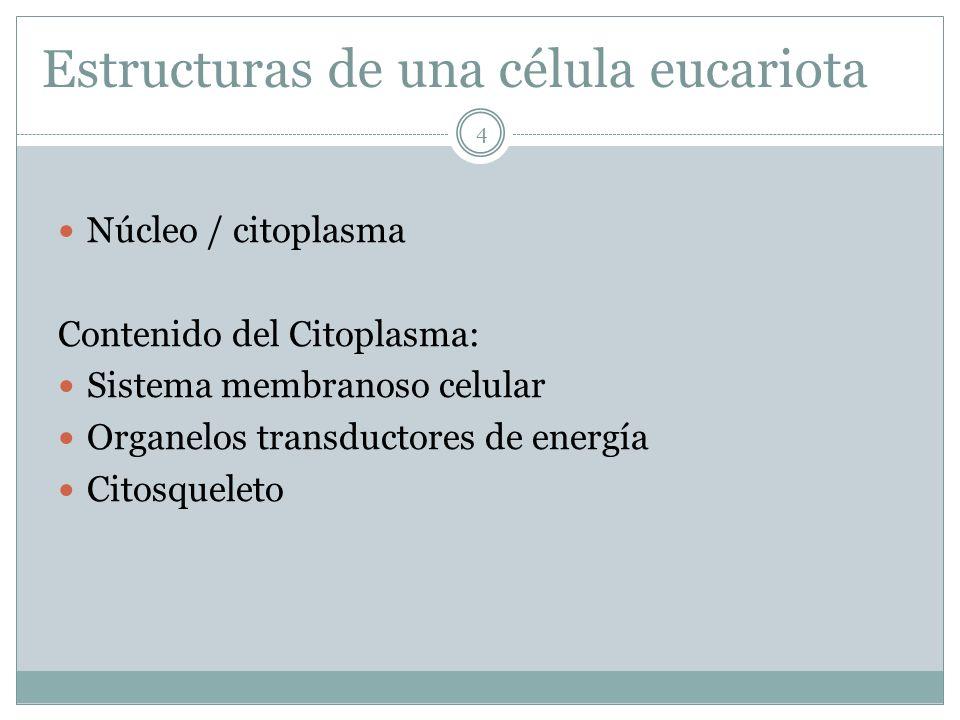 Estructuras de una célula eucariota