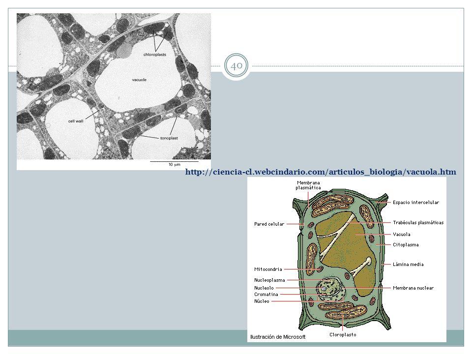 http://ciencia-cl.webcindario.com/articulos_biologia/vacuola.htm