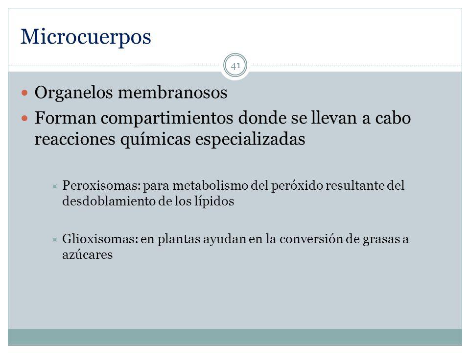 Microcuerpos Organelos membranosos