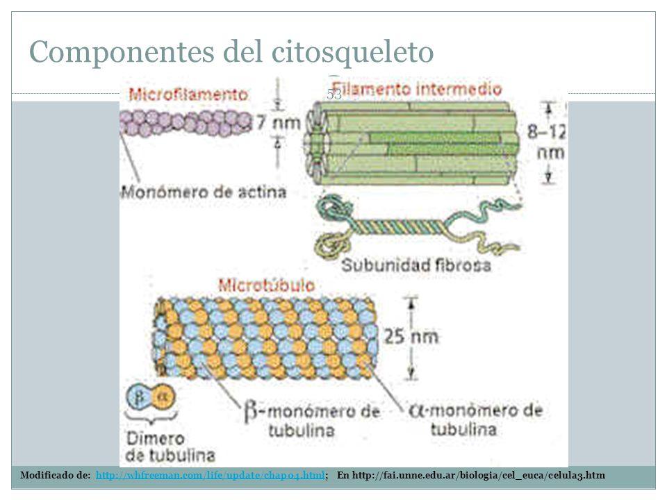 Componentes del citosqueleto
